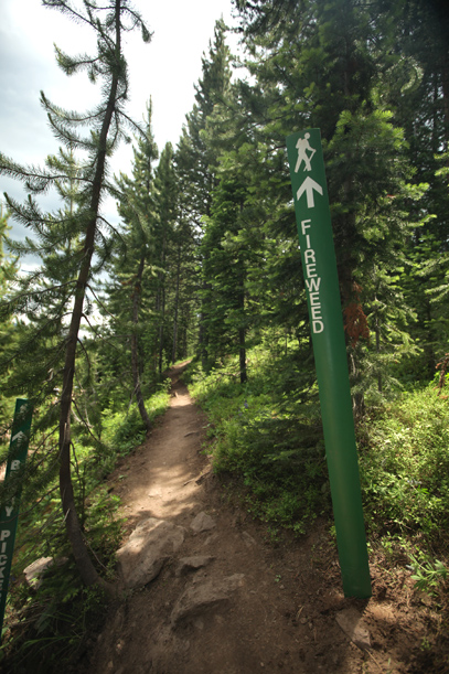 Fireweed Trail on Vail Mountain