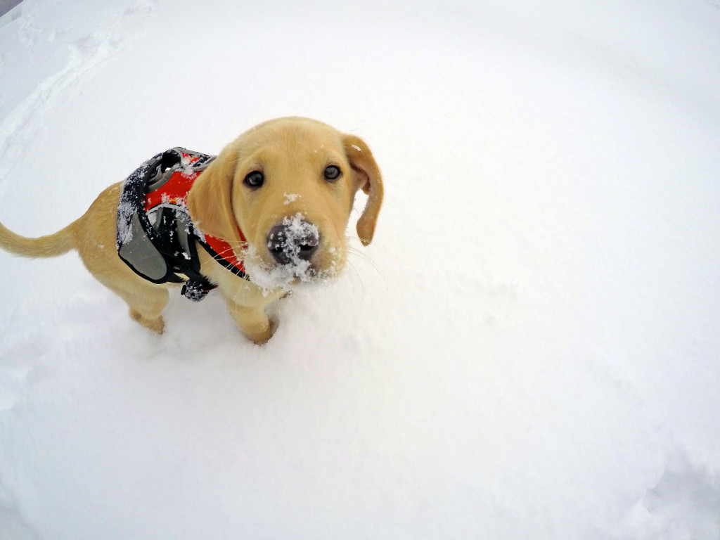 GoPro shot of patrol dog puppy